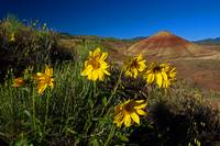 Painted Hills Wildflowers_1