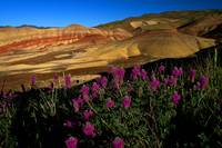 Painted Hills Wildflowers_2