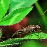 """Tough Bug"" by feagans_photography"
