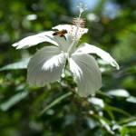 """Bee on Flower"" by LizRhule"