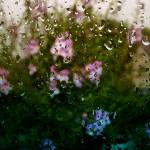 """Flowers & Rain"" by Flaxton-Productions"