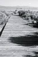 Mono Lake Boardwalk
