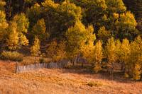 Golden Colorado Autumn landscape