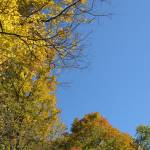 """""""Fall Colors"""" by karine_gagnon3"""