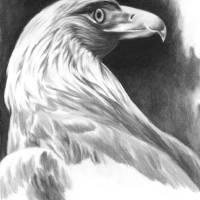 Golden Eagle by Roger Dullinger