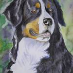 """Better, Bernese Mountain Dog"" by Carissa_Hersum"