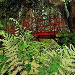 """Ferns by the Red Bridge"" by RickTodaro"