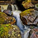 """""""Spring of a Rapid"""" by signum"""