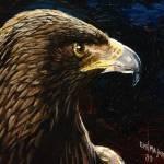 """Eagle Profile"" by Eagleyegallery"