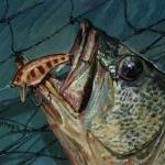 """""""Hooked on Bass"""" by Eagleyegallery"""