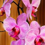 """""""Orchid II"""" by carlosyanez"""