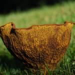 """Cup of Fungi"" by artafire"
