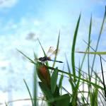 """""""Dragonfly"""" by artafire"""