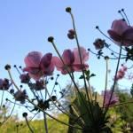 """""""Field Flowers"""" by artafire"""