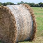 """""""Farmers Branch Hay"""" by GlendinePhotography"""