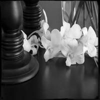 black table | white orchids