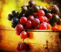 Grapes of the Fall