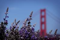 190.  blooming lupin & some ggb-keh