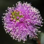 """Purple Burst"" by DonBakerPhotography"