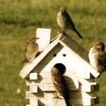 """""""Montana Birds..."""" by kristysphotography"""