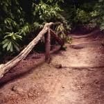 """Shining Path"" by PvN"