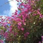 """Tekoa flowers"" by nahone"