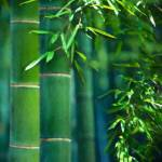 """Bamboo Forest"" by jbmamay"