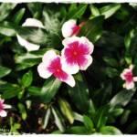 """""""Flower"""" by Mariacar"""