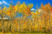 Colorful Colorado Fall Foliage