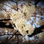 """cherry"" by Mariacar"