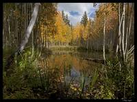 Duck Creek in Autumn