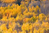 Colorful Colorado Autumn Landscape