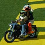 """Oregon Duck on Harley"" by netbrands"