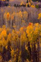 Colorful Colorado Autumn Landscape Vertical Image