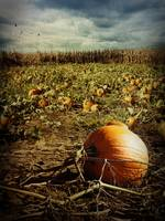 The Pumpkin Patch!