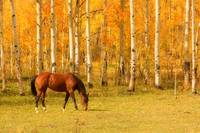 Beautiful Grazing in an Autumn Pasture