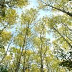 """Autumn Breezes"" by halwatson"