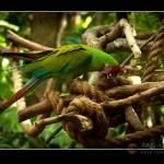 """wild life photography -raj"" by rajartworks"