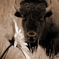 Where the Buffalo Roamed by I.M. Spadecaller