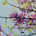 """spring.1"" by babi"