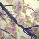 """spring.2"" by babi"