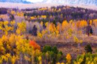 Dreamy Rocky Mountain Autumn View