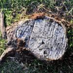 """""""Stump"""" by Zimm"""