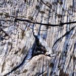"""Ridges of a Tree"" by Zimm"