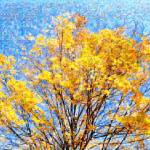"""Golden Leaves Foliage Photo Mosaic"" by LocalStockPhoto"