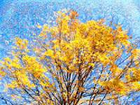 Golden Leaves Foliage Photo Mosaic