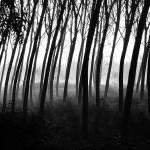 """""""alberi curvi a luzzara"""" by fabrizioberni"""
