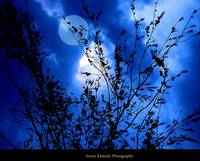 Moonlight Becomes you......