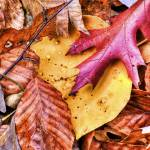 """""""Fall Texture 1 by Jim Crotty"""" by jimcrotty"""