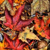 Fall Texture 2 by Jim Crotty by Jim Crotty